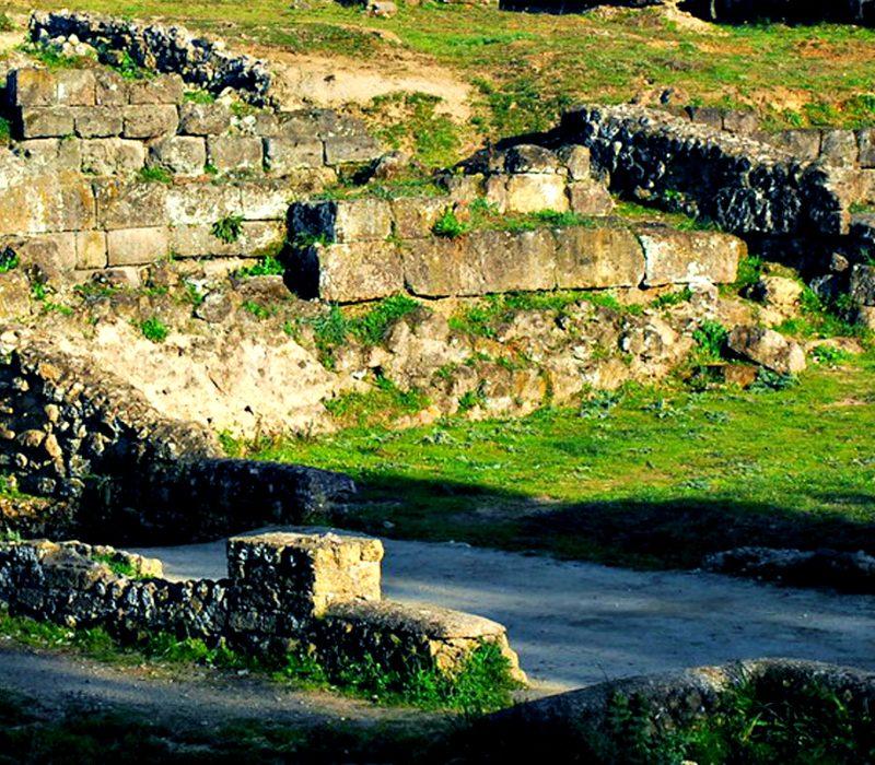 Indagini sui resti faunistici nell'abitato etrusco di Veio